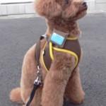 Fujitsu zariadenie na obojok stráži zdravotný stav vášho zvieratka bezdrôtovo online